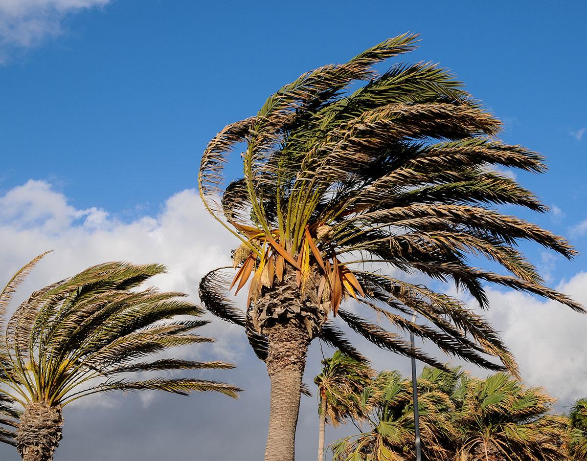High-Wind--73642921